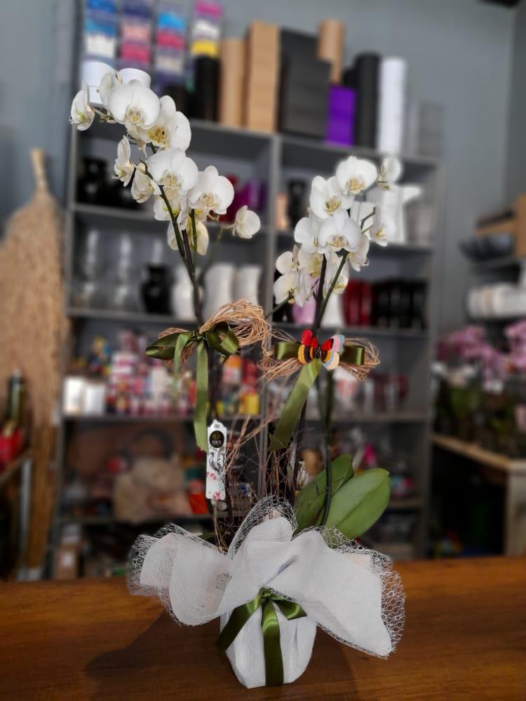 1 Saatte Teslim Orkide - 11