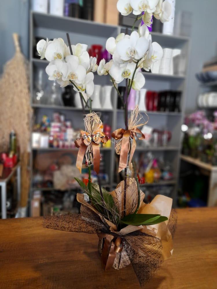 1 Saatte Teslim Orkide - 13