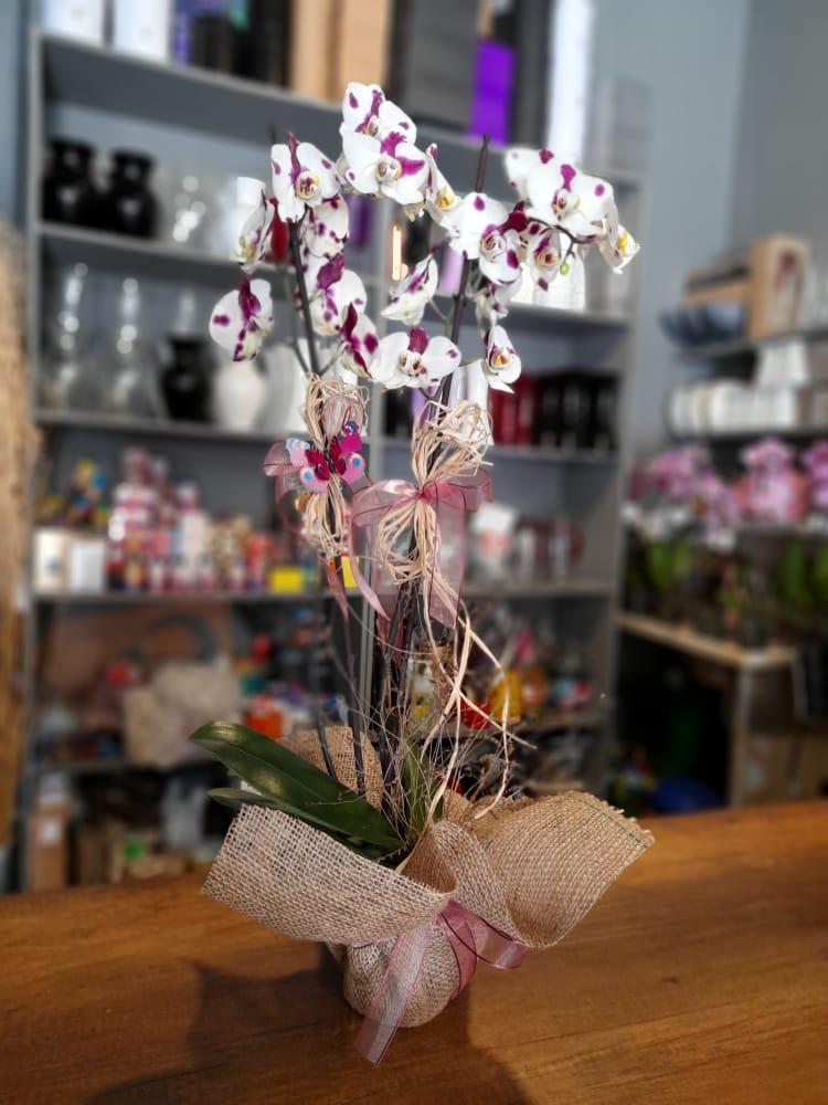 1 Saatte Teslim Orkide - 14