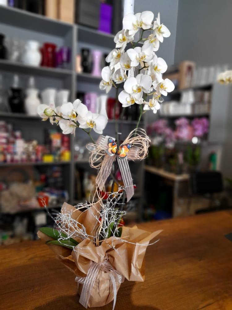 1 Saatte Teslim Orkide - 15