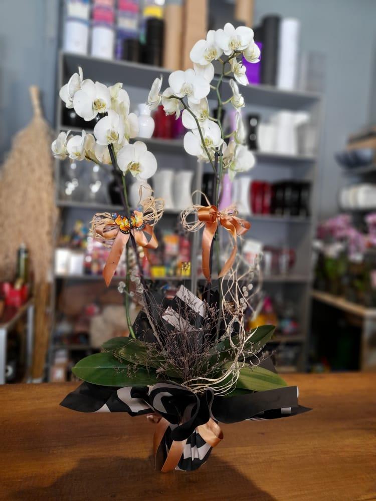 1 Saatte Teslim Orkide - 21