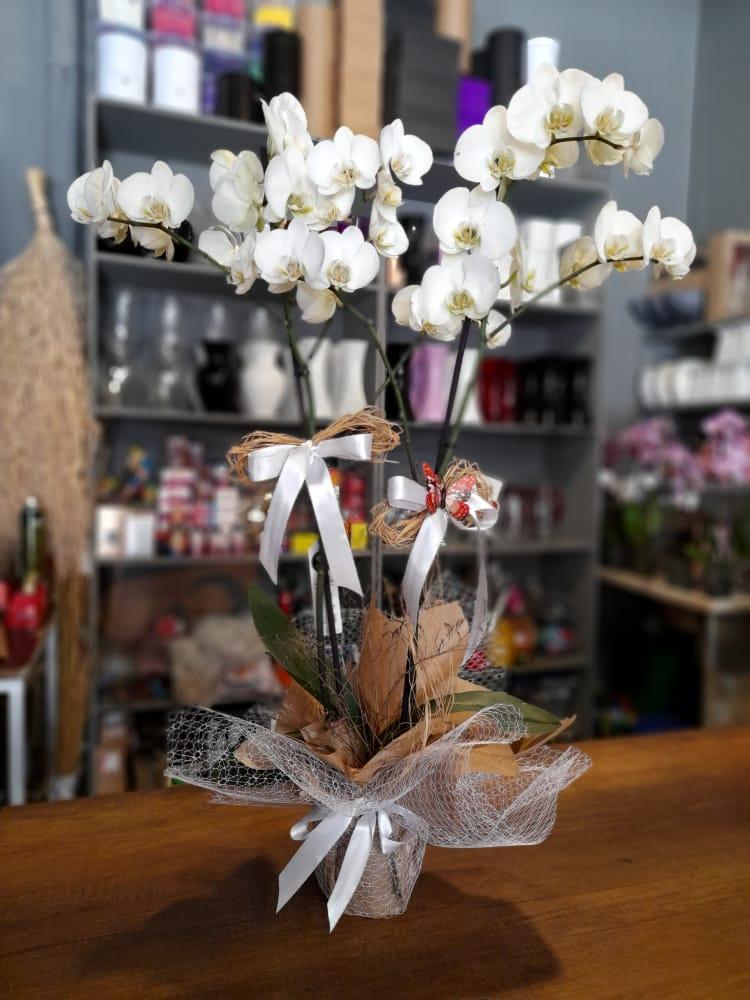 1 Saatte Teslim Orkide - 22