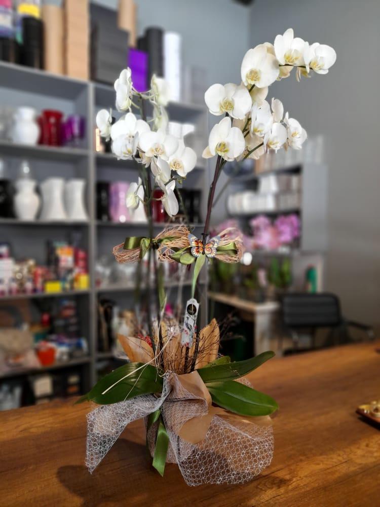 1 Saatte Teslim Orkide - 23