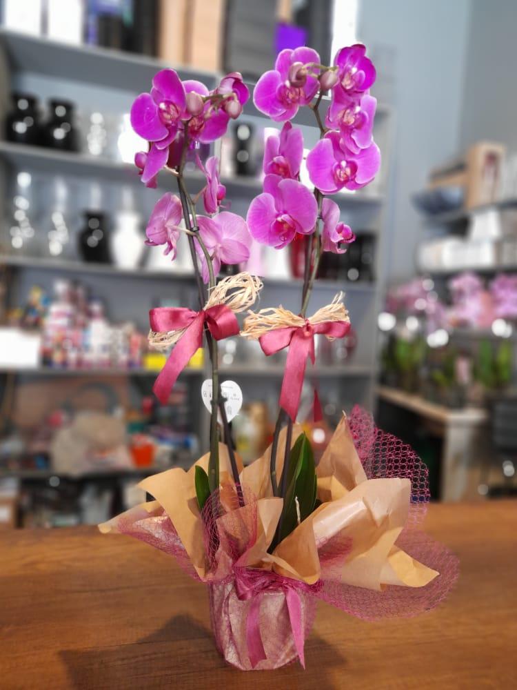 1 Saatte Teslim Orkide - 24