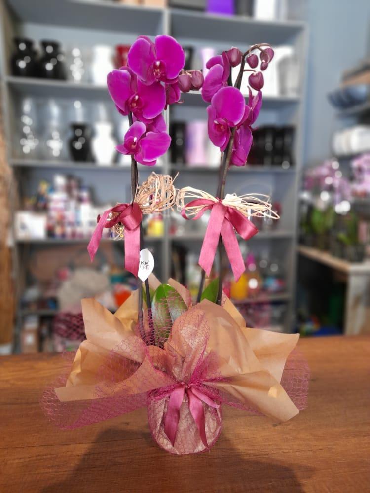 1 Saatte Teslim Orkide - 25