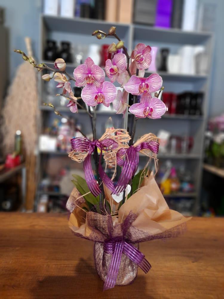 1 Saatte Teslim Orkide - 26