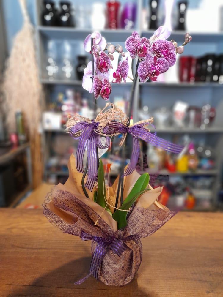 1 Saatte Teslim Orkide - 29