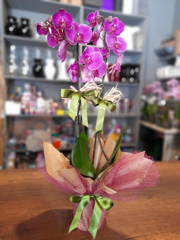 1 Saatte Teslim Orkide - 5