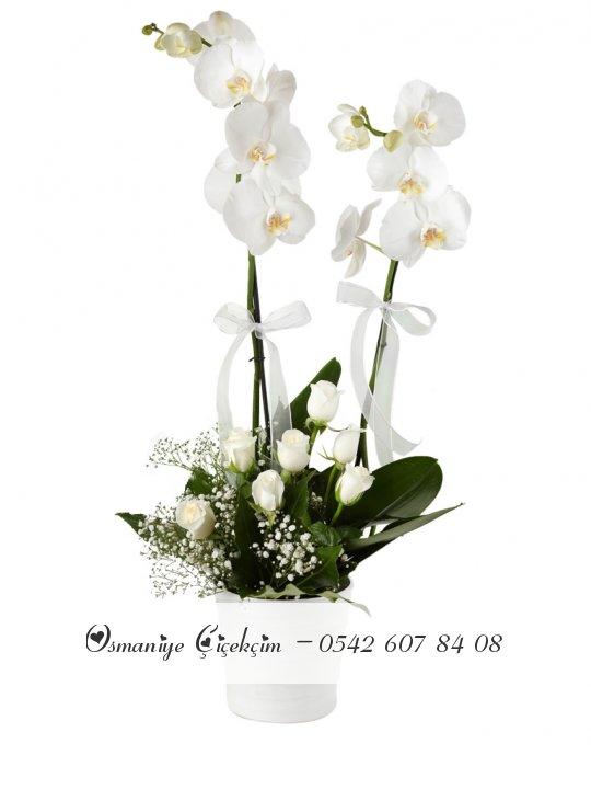 Çift Dal Beyaz Orkide Ve Beyaz Güller