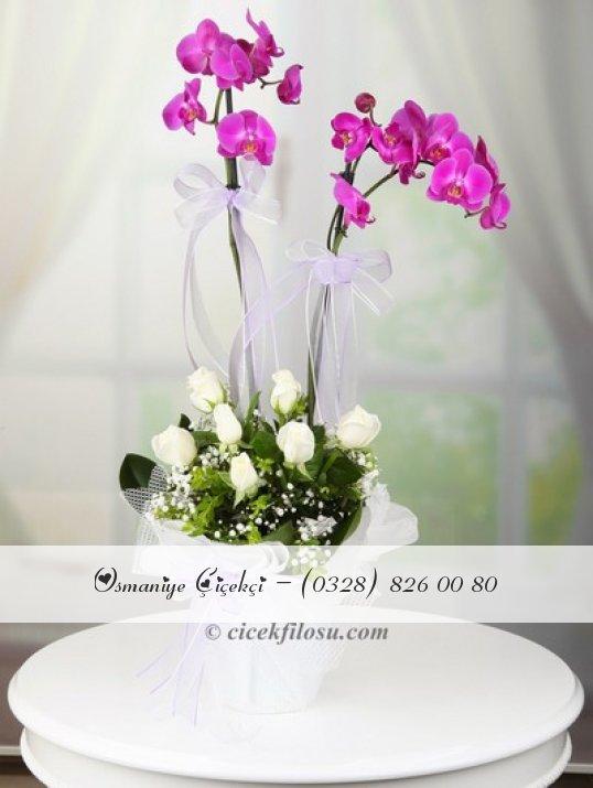 Çiftli Orkide ve Beyaz Güller
