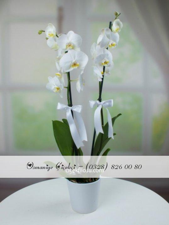 Kampanyalı Orkide
