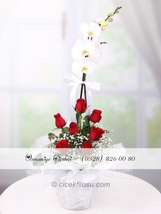Tekli Orkide ve Kırmızı Güller