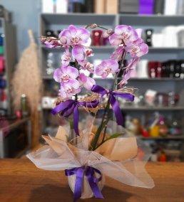 1 Saatte Teslim Orkide - 1