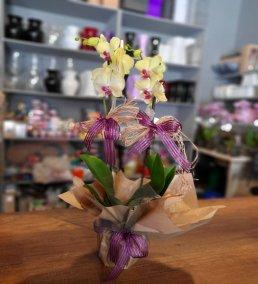 1 Saatte Teslim Orkide - 10
