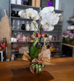 1 Saatte Teslim Orkide - 16