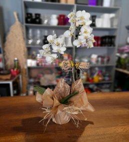 1 Saatte Teslim Orkide - 18