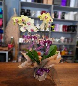 1 Saatte Teslim Orkide - 2