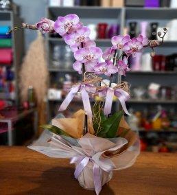 1 Saatte Teslim Orkide - 27