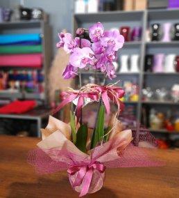1 Saatte Teslim Orkide - 28