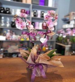1 Saatte Teslim Orkide - 3