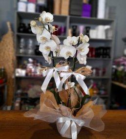 1 Saatte Teslim Orkide - 4