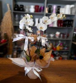 1 Saatte Teslim Orkide - 6