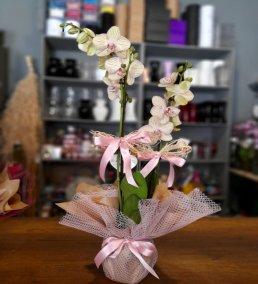 1 Saatte Teslim Orkide - 7
