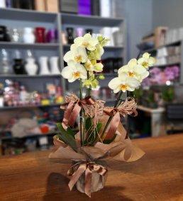 1 Saatte Teslim Orkide - 8