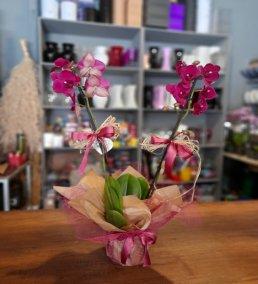1 Saatte Teslim Orkide - 9
