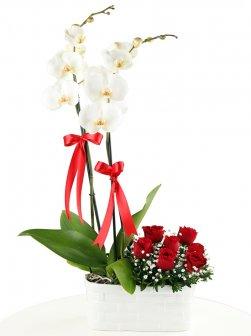 Çift Dal  Beyaz Orkide Ve  7 Gül