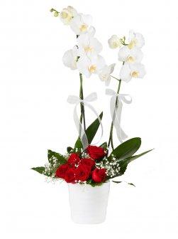Çift Dal Beyaz Orkide Ve Güller