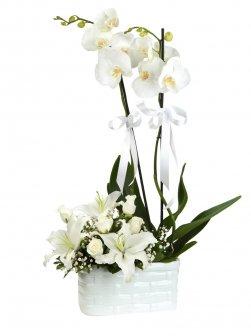 Çift Dal Orkide , Kazabilanka Ve Güller