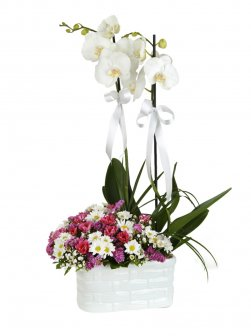 Çift Dal Orkideli Bahar Aranjmani