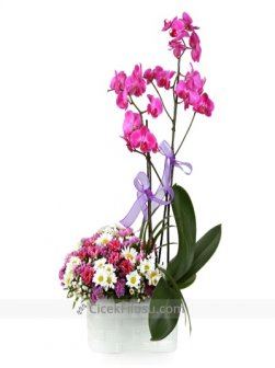 Sen Başkasın Pembe Orkide